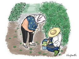 Grand-Parents picking the Golden Fruits © 2018, KeQiaoEnAll Rights Reserved